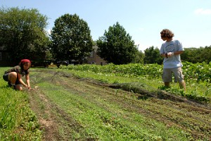 summer farm jobs